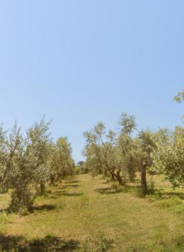 Frantoio-Montecchia-Morro-D'Oro-Teramo-Abruzzo-responsabile-qualità-frantoiano